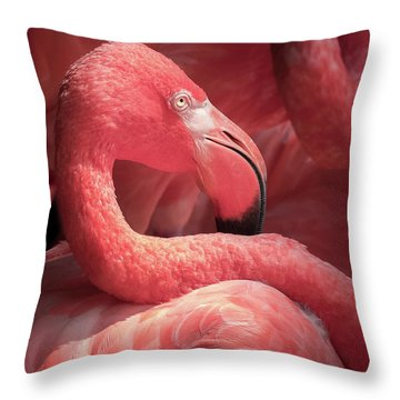 Pink Flamingo Fort Worth Zoo Throw Pillow