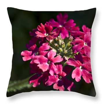Pink Flower Throw Pillow by Svetlana Sewell