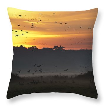 Pink Footed Geese At Holkham Norfolk Uk Throw Pillow