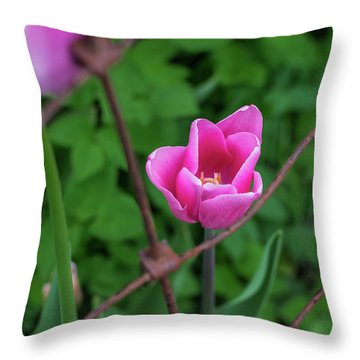 Pink In Stratford Throw Pillow