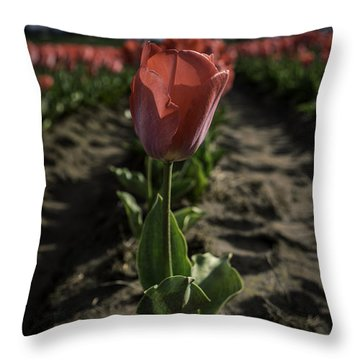 Throw Pillow featuring the photograph Pink It's My New Obsession by Ryan Smith