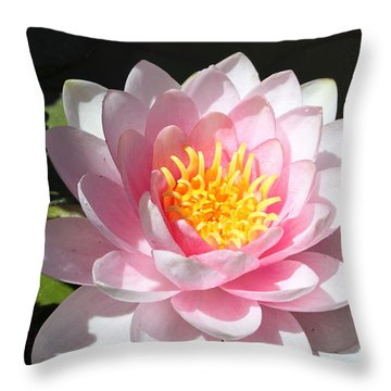 Throw Pillow featuring the photograph Pink Lady by M Diane Bonaparte