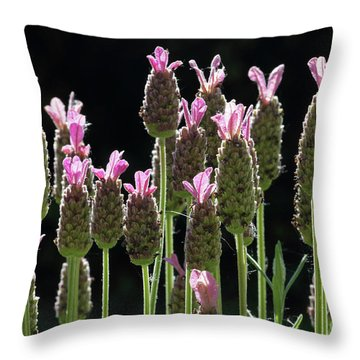 Pink Lavender Throw Pillow