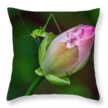 Pink  Lotus With Company Throw Pillow