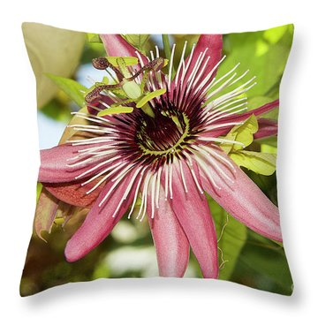 Pink Passiflora Throw Pillow by Elvira Ladocki