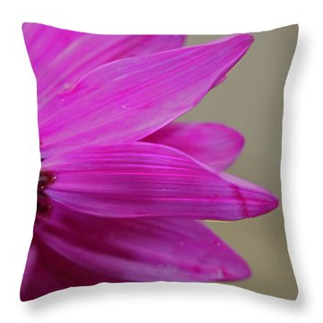 Pink Ray Florets Throw Pillow