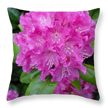 Pink Rhodie Throw Pillow by Shirley Heyn