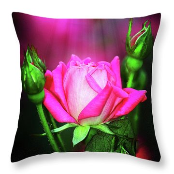 Pink Rose Throw Pillow by Inspirational Photo Creations Audrey Woods