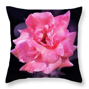 Throw Pillow featuring the photograph Pink Rose With Violet by Howard Bagley