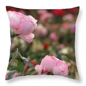 Throw Pillow featuring the photograph Pink Roses by Laurel Powell