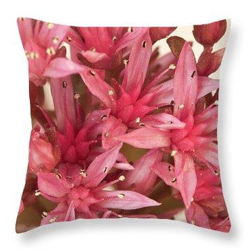 Pink Sedum Flower Macro Throw Pillow by Sandra Foster