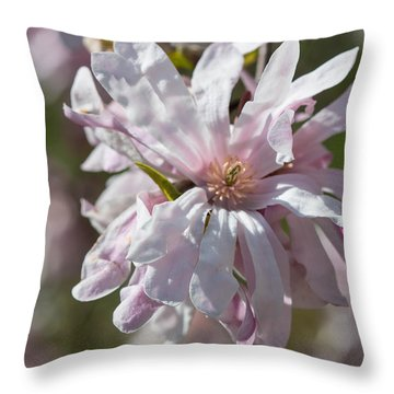 Throw Pillow featuring the photograph Pink Snowball Magnolia by Cathy Donohoue