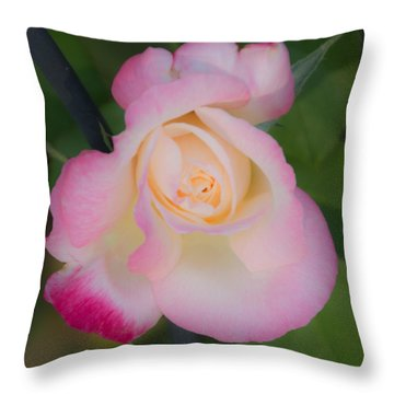 Pink Tinged Rose Throw Pillow by Cathy Donohoue