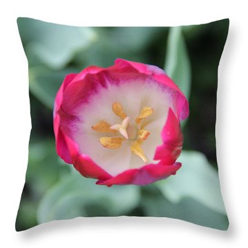 Pink Tulip Top View Throw Pillow