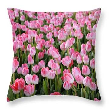 Pink Tulips- Photograph Throw Pillow