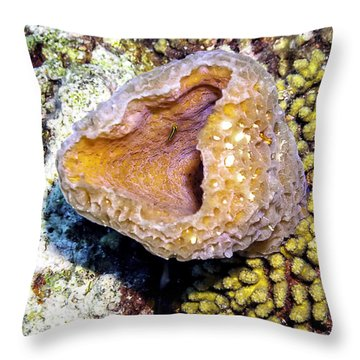 Throw Pillow featuring the photograph Pink Vase Sponge by Perla Copernik