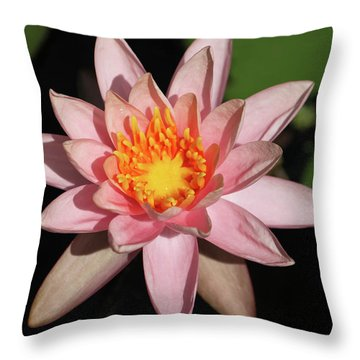 Pink Water Lily 2016 Throw Pillow by Suzanne Gaff