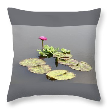 Throw Pillow featuring the photograph Pink Water Lily by Ellen Tully