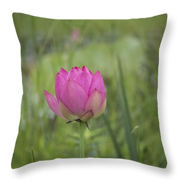 Pink Waterlily Bud Throw Pillow by Linda Geiger