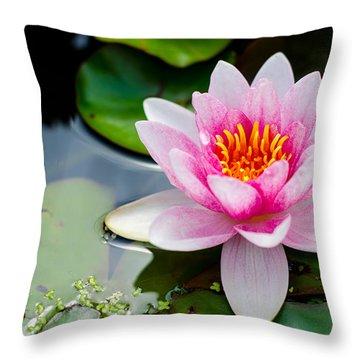 Pink Waterlily Throw Pillow by Daniel Precht