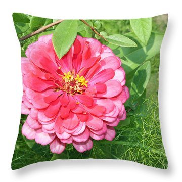 Throw Pillow featuring the photograph Pink Zinnia With Ferns by Ellen Tully
