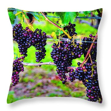 Pinot Noir Grapes Throw Pillow