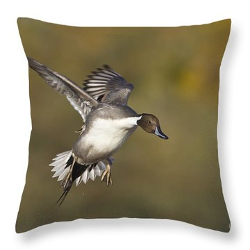 Pintail Coming In Throw Pillow