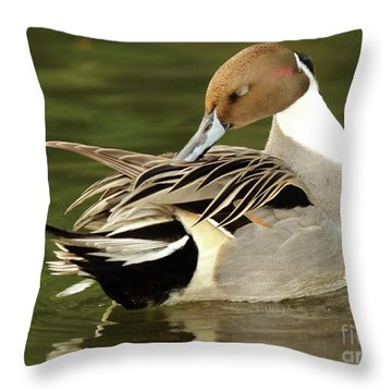 Throw Pillow featuring the photograph Pintail Drake Grooming by Max Allen