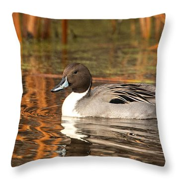 Pintail Throw Pillow by Kelly Marquardt