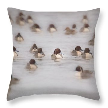 Throw Pillow featuring the photograph Pintail Repeat  by Kelly Marquardt