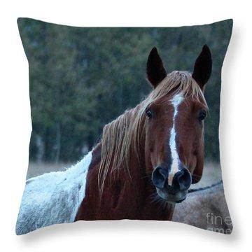 Pinto Throw Pillow