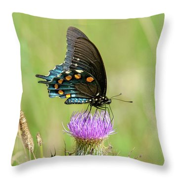 Throw Pillow featuring the photograph Pipevine Swallowtail Butterfly 2 by Lara Ellis