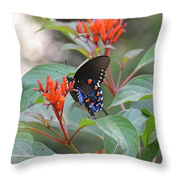 Pipevine Swallowtail Butterfly On Firebush Throw Pillow
