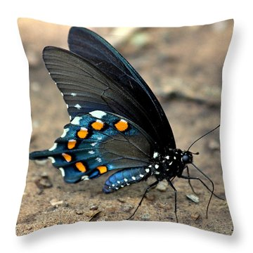 Pipevine Swallowtail Close-up Throw Pillow