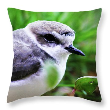 Throw Pillow featuring the photograph Piping Plover by Anthony Jones