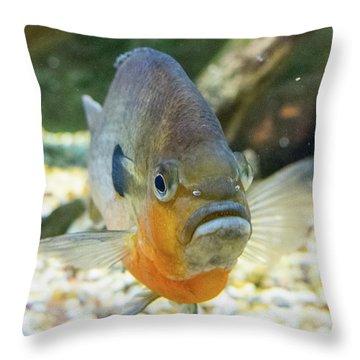 Piranha Behind Glass Throw Pillow