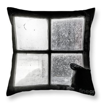Pitcher In The Window Throw Pillow