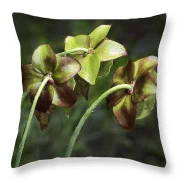 Pitcher Plant 09 Throw Pillow