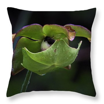 Pitcher Plant 10 Throw Pillow