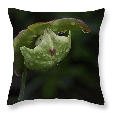 Pitcher Plant 12 Throw Pillow