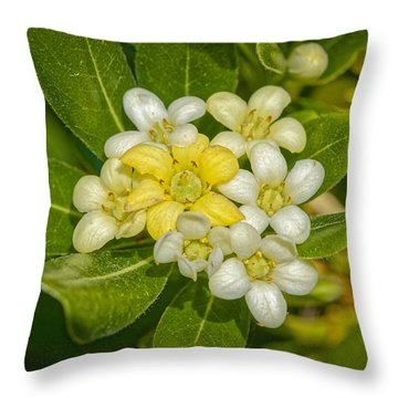 Pittosporum Flowers Throw Pillow