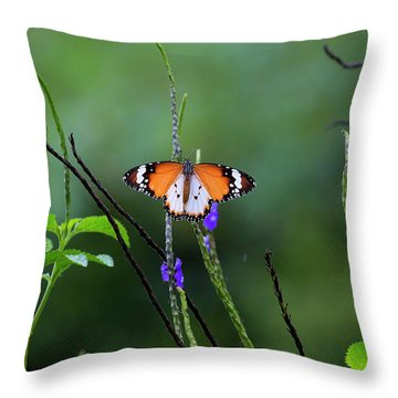 Plain Tiger Butterfly Throw Pillow by David Gn