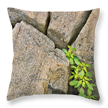 Plant In Granite Crevice Abstract Throw Pillow by Peter J Sucy