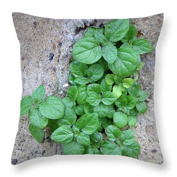 Plant In Stone Naples Italy Throw Pillow