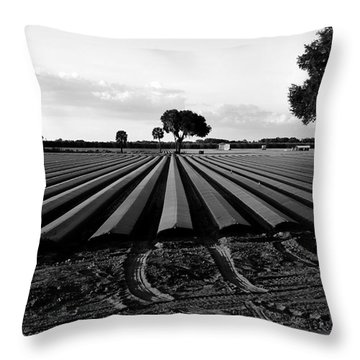 Planted Fields Throw Pillow by David Lee Thompson