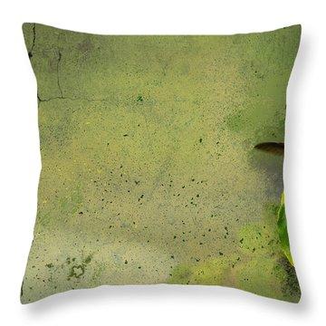 Plate 087 - Hummingbird Grunge Series Throw Pillow