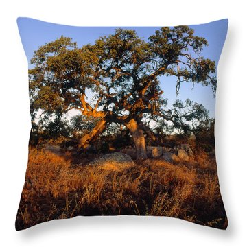 Plateau Light Throw Pillow