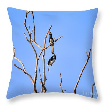 Play Time Hornbills Throw Pillow