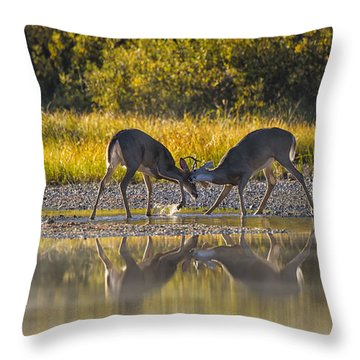 Playful Young Bucks Throw Pillow