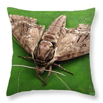 Plebeian Sphinx Moth Throw Pillow